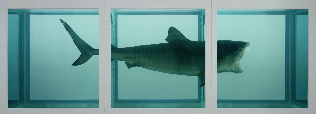 Abb. 16: Damien Hirst, The Physical Impossibility of Death in the Mind of Someone Living, 1991, 213 x518 x213cm, Tigerhai, Glas, Stahl und fünfprozentige Formaldehydlösung. Courtesy Damien Hirst and Hirst Holdings/Tate Modern/PA