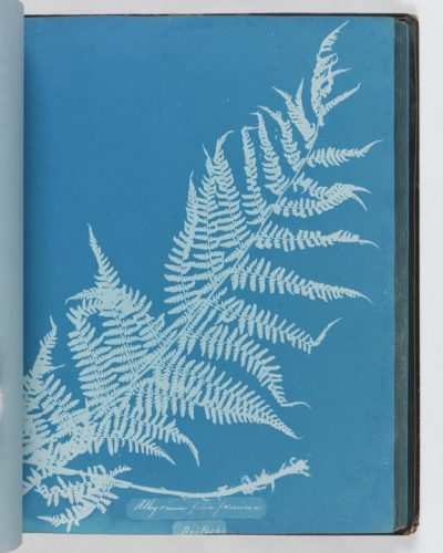 Anna Atkins, Cyanotype of Athyrium filix-femina, 1853 A cyanotype, of Athyrium filix-femina from the album 'Cyanotypes of British and Foreign Ferns' © National Media Museum, Bradford / SSPL. Creative Commons BY-NC-SA Science Museum Group Collection